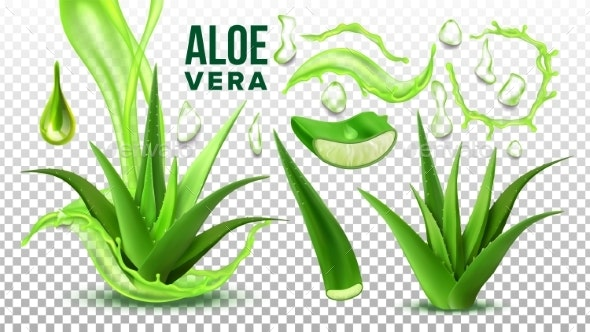 Pharmacy Succulent Aloe Vera Elements Set Vector - Health/Medicine Conceptual