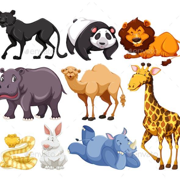 Wild Animals Mix