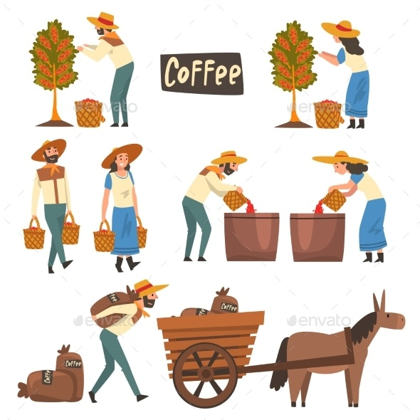 Farmers Gathering Sorting and Packaging Coffee - Industries Business