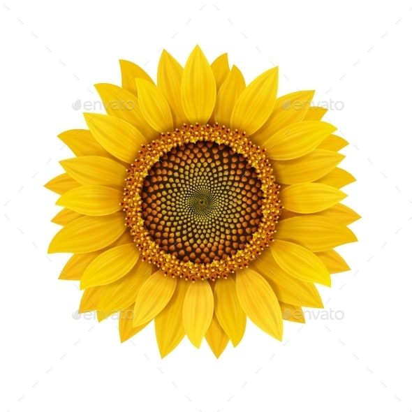 Sunflower Realistic Isolated Illustration - Flowers & Plants Nature