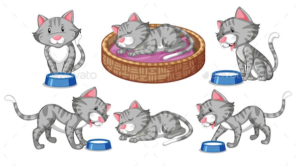 Cat Collection - Animals Characters