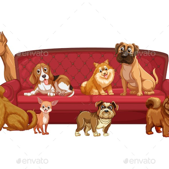 Sofa Dogs