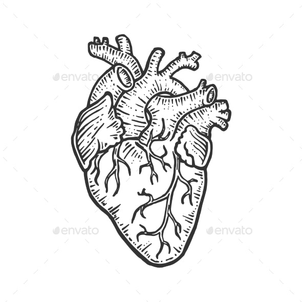 Human Heart Sketch Engraving Vector Illustration - Miscellaneous Vectors