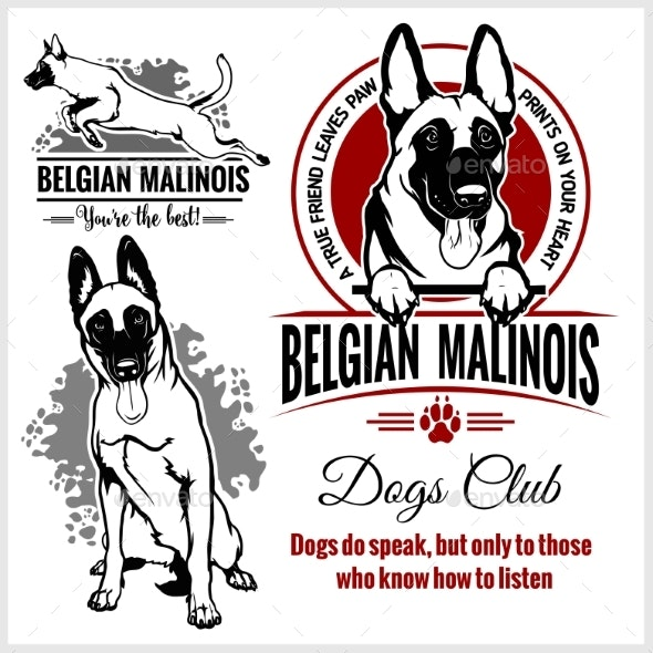 Belgian Malinois Shepherd Dog - Animals Characters