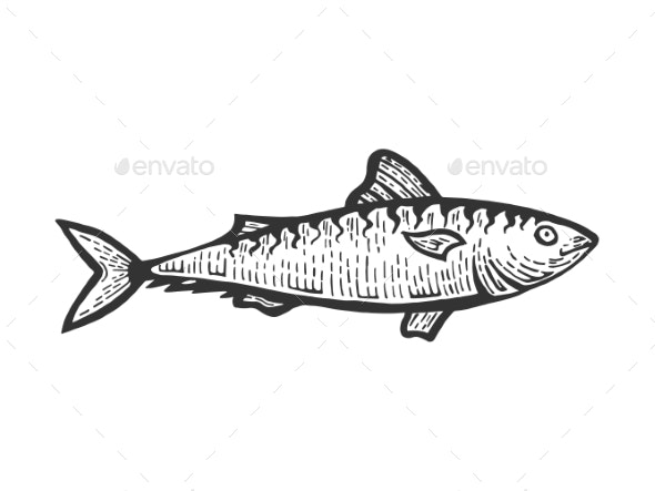 Herring Clupea Fish Sketch Engraving Vector - Food Objects
