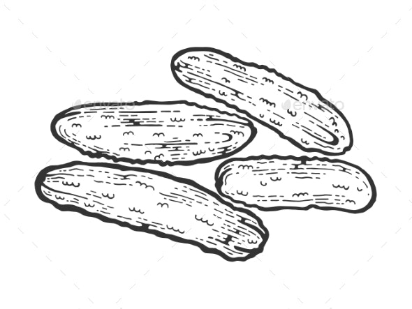 Cucumbers Sketch Engraving Vector Illustration - Food Objects