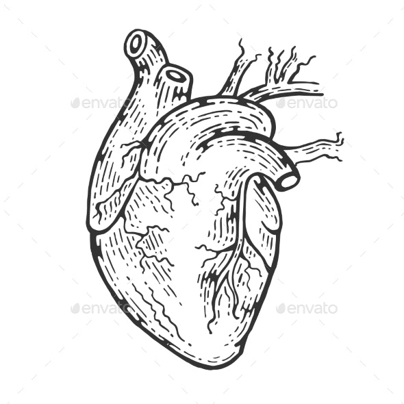 Human Heart Sketch Engraving Vector Illustration - Organic Objects Objects