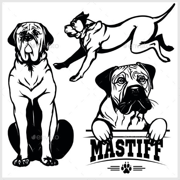 Mastiff Dog - Animals Characters