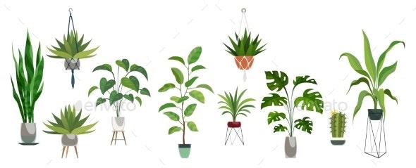 Pot Plant Set - Flowers & Plants Nature