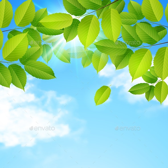 Green Leaves Clouds and Blue Sky - Flowers & Plants Nature