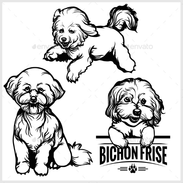 Bichon Frise Dog - Vector Set Isolated - Animals Characters