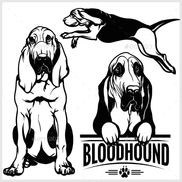 Bloodhound Dog - Vector Set Isolated Illustration - Animals Characters