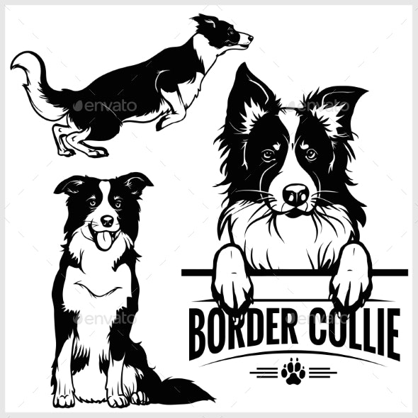 Border Collie Dog - Vector Set Isolated - Animals Characters