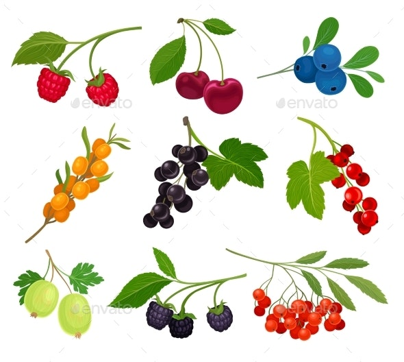 Collection of Different Varieties of Berries - Food Objects