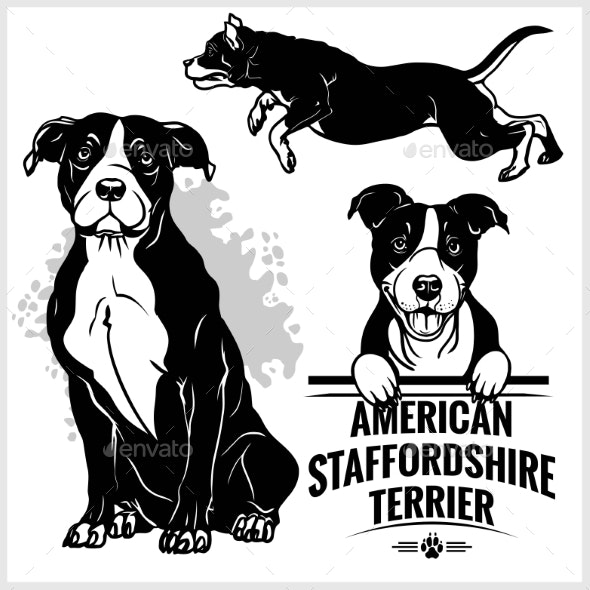 American Staffordshire Terrier Dog - Animals Characters