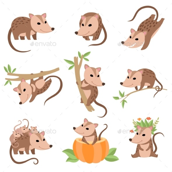 Opossums Animals in Various Poses Set - Animals Characters