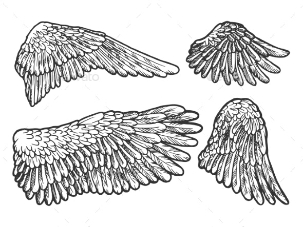 Bird Angel Wings Set Sketch Engraving Vector - Animals Characters