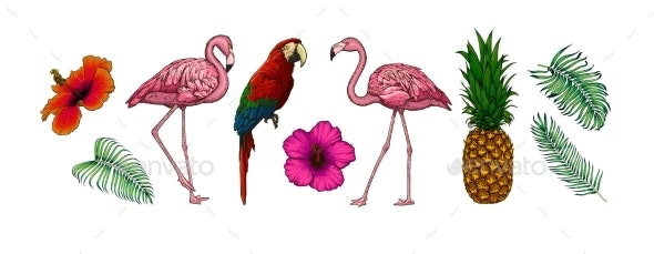 Vector Collection of Tropical Leaves Flowers and Animals - Miscellaneous Vectors