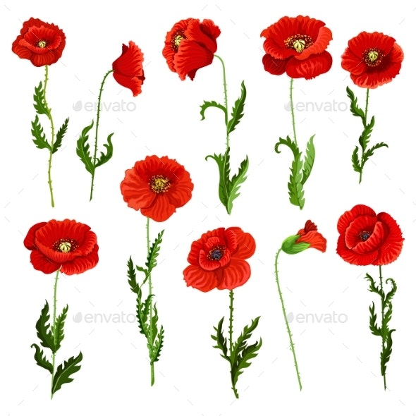 Vector Isolated Icons of Poppy Flowers - Flowers & Plants Nature