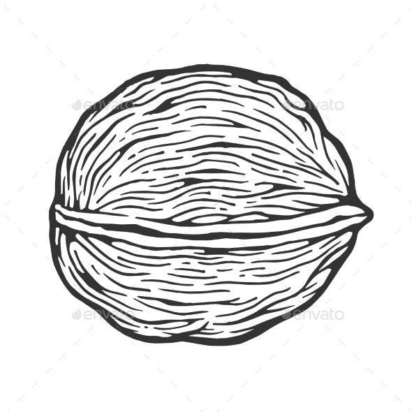 Walnut Nut Sketch Engraving Vector Illustration - Food Objects
