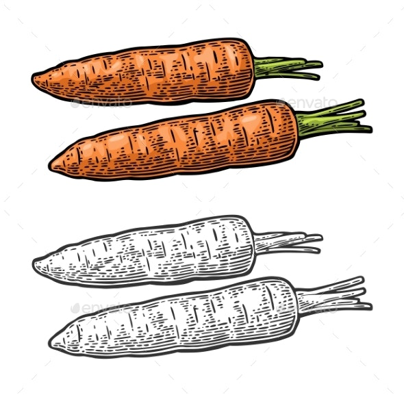 Two Carrots - Food Objects