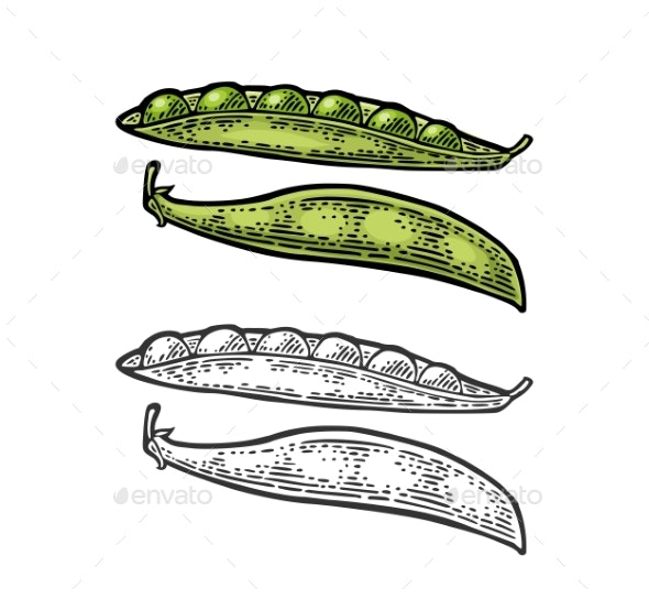 Peas Pods Closed and Open - Food Objects