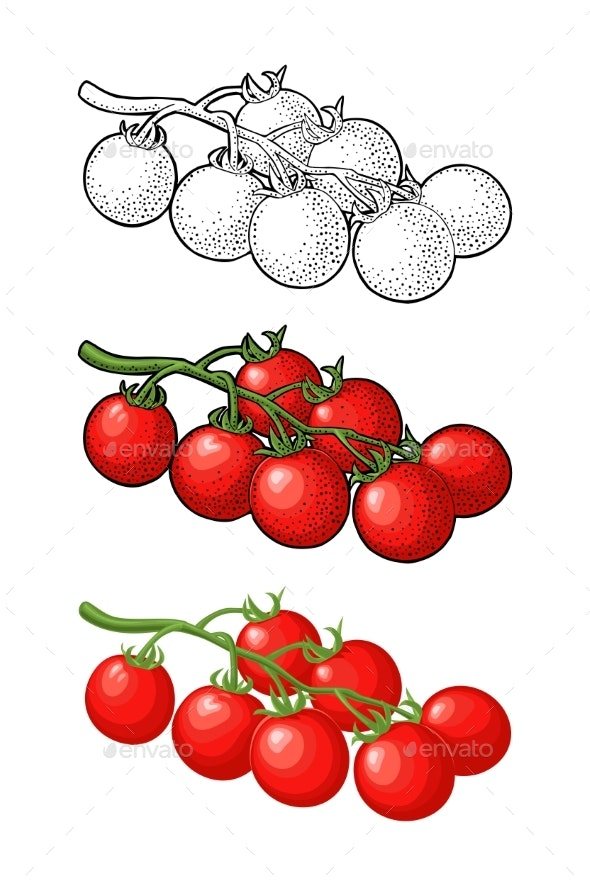 Whole Tomato Vector Engraved and Flat - Food Objects