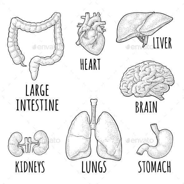 Human Anatomy - People Characters