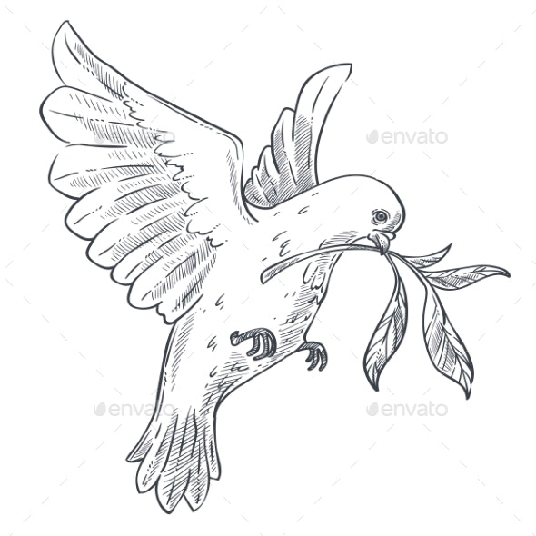 Dove or Pigeon with Olive Branch Isolated Bird - Animals Characters