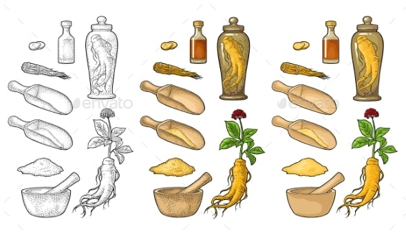 Root and Leaves Panax Ginseng Vector Engraving - Flowers & Plants Nature