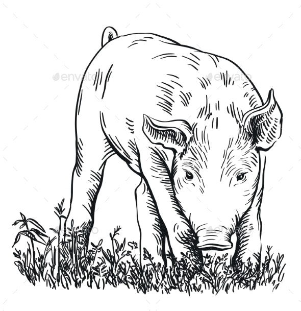 Pig Stands in the Grass with His Head Down - Animals Characters
