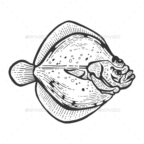 Flounder Flatfish Plaice Fish Sketch Vector - Animals Characters
