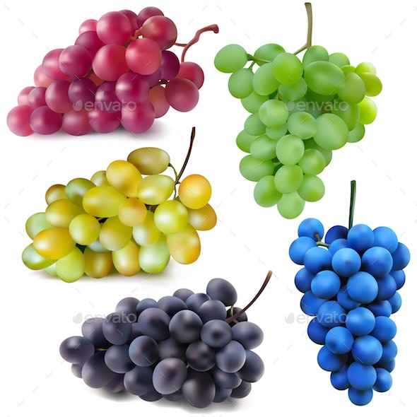 Vector Red White Green Blue and Dark Blue Grapes - Food Objects
