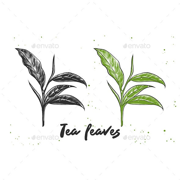 Hand Drawn Sketch of Tea Leaves - Flowers & Plants Nature