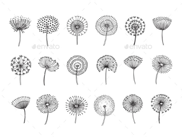 Dandelion Set - Organic Objects Objects