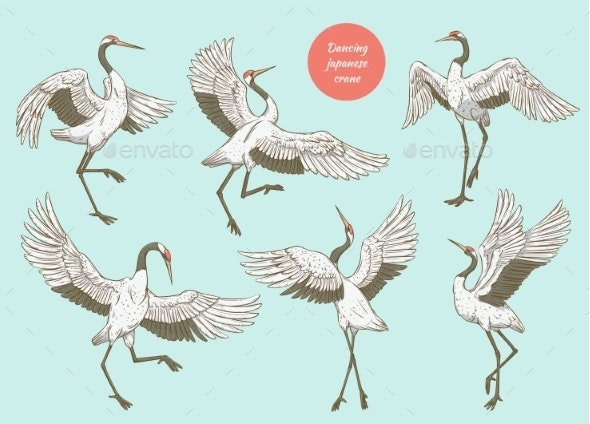 Set of Cranes Standing with Spread Wings - Animals Characters