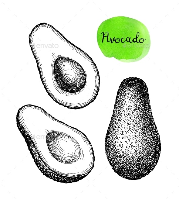 Ink Sketch of Avocado - Food Objects