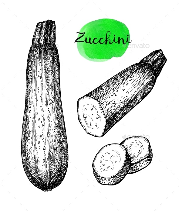 Ink Sketch of Zucchini - Food Objects