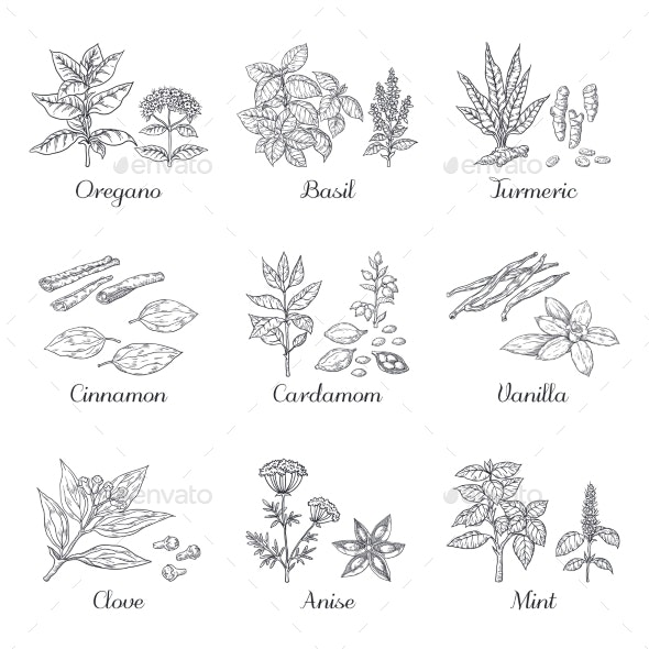 Hand Drawn Spices - Food Objects