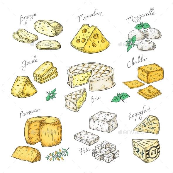 Hand Drawn Cheeses
