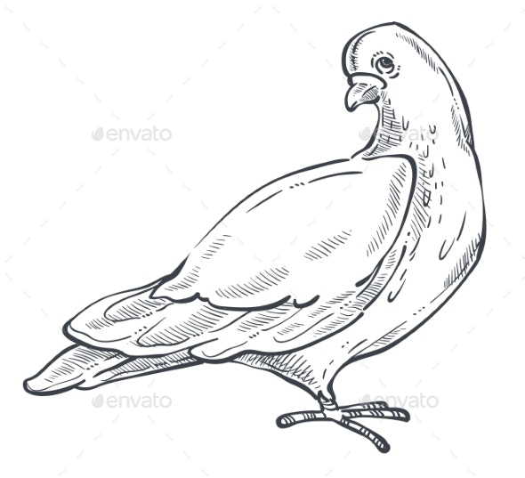 Dove or Pigeon Isolated Animal Sketch Bird Peace