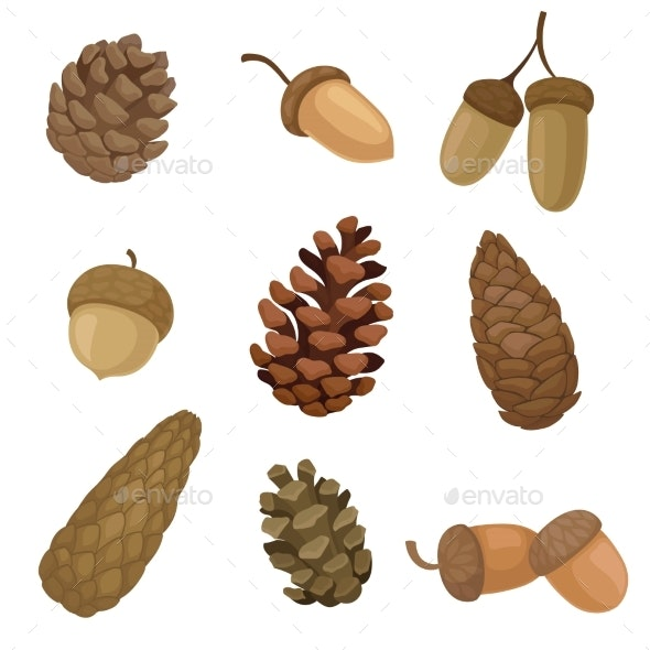 Collection of Different Images of Acorns and Cones - Organic Objects Objects