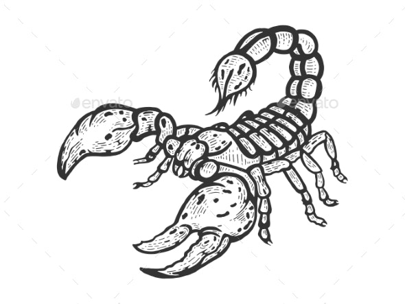 Scorpion Sketch Engraving Vector - Animals Characters