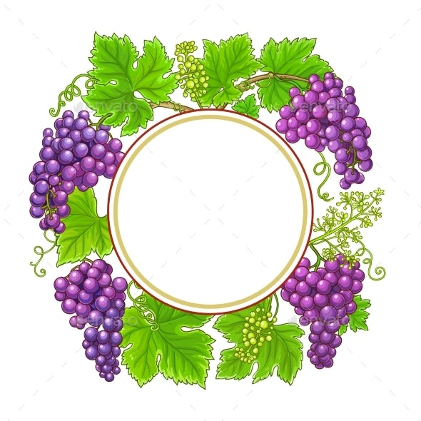 Grapes Branches Vector Frame on White Background - Food Objects