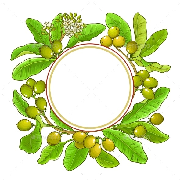 Shea Branches Vector Frame on White Background - Flowers & Plants Nature