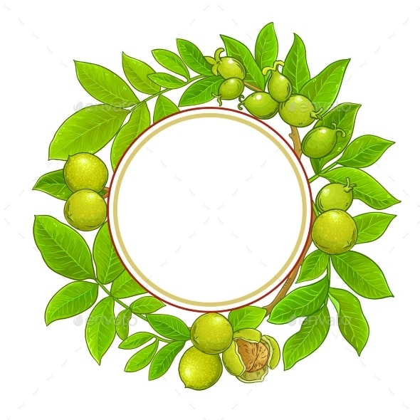 Walnut Branches Vector Frame on White Background - Food Objects