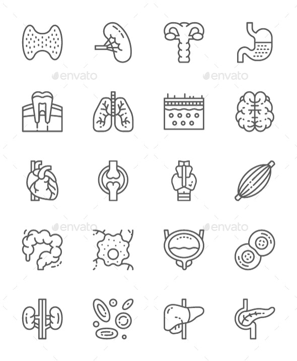 Set Of Human Organs Line Icons. Pack Of 64x64 Pixel Icons - Objects Icons