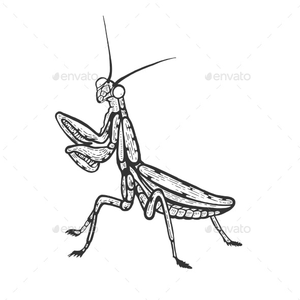 Mantis Insect Sketch Engraving Vector - Animals Characters