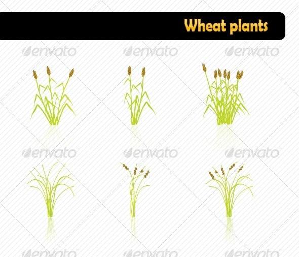 Wheat plants - Flowers & Plants Nature