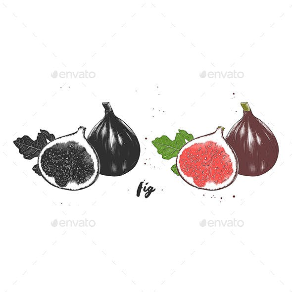 Hand Drawn Sketch Of Fresh Figs In Monochrome And Colorful